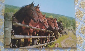 Pferd-AK-ungelaufen-Am-Gatter-Susy-Card-grako