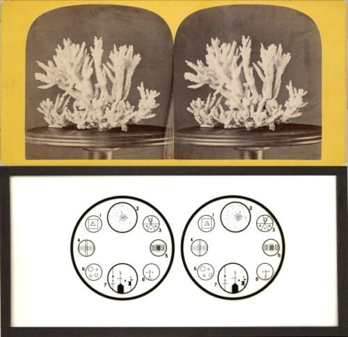 18 Stereoviews Coralle Effects 3DWonder Lot 1