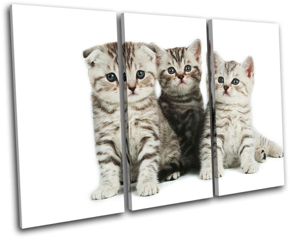 Kittens Cats Cats Cats Pets Animals TREBLE TELA parete arte foto stampa 988071