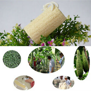 1X Natural Loofah Luffa Sponge Bath Shower Spa e scrubber per il corpo v