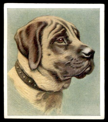 """The Mastiff No 12 Godfrey Phillips """"Our Dogs"""" 1939"""