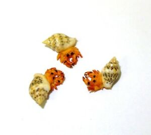 Dollhouse Miniatures Three Hermit Crabs for Doll House Miniature Beach Scene