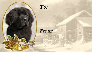 Newfoundland Dog A6 Blank Card No 1 By Starprint