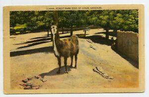 Antique Postcard St. Louis MO Forest Park Zoo Llama 8-13 ...