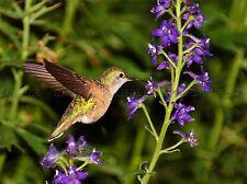 ANIMAL BIRD HUMMING WING FLOWER TINY LARGE POSTER ART PRINT BB2937A