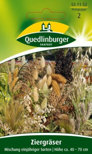 Quedlinburger-graminacee ornamentali