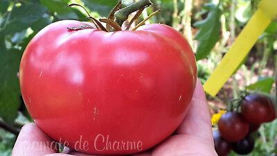10 graines de tomate rare Miel de Taureau gros fruits heirloom tomato seeds bio