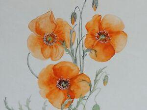 Monogrammist-034-H-S-034-Pflanzen-Aquarell-1950-KLATSCHMOHN-MOHN