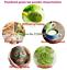 thumbnail 7 - Chinese 1000g Matcha Green Tea Powder 100% Natural Organic Slimming Weight Loss