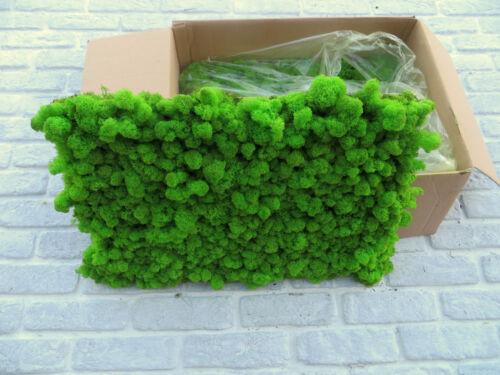 Frühlingsgrün Islandmoos Finnlandmoos Moosplatten EasyMoos Rentiermoos