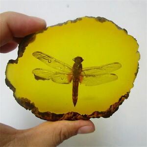 Beautiful Amber Dragonfly Fossil Insects Manual Polishing