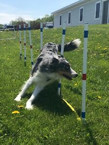 Image Is Loading Dog Agility Equipment Stick In The Ground Weave