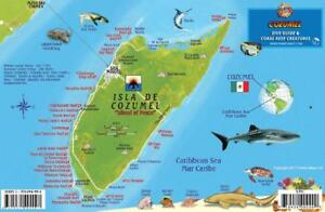 Cozumel Mexico Map Reef Creatures Waterproof Fish Card Franko Maps