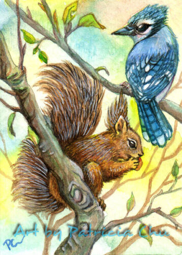 "ACEO LE Art Card Print 2.5x3.5/"" /"" Blue Jay And Squirrel /"" Animal Art by Patricia"