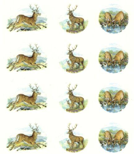"12 Deer Buck Stag Doe 1/"" to 1-1//4/"" Waterslide Ceramic Decals Xx"
