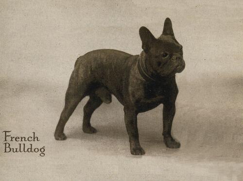 FRENCH BULLDOG CHARMING DOG GREETINGS NOTE CARD BEAUTIFUL STANDING DOG
