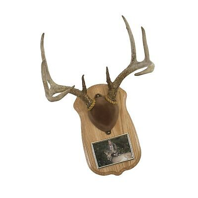 Walnut Hollow Country Deluxe Antler Display Kit with Photo ...