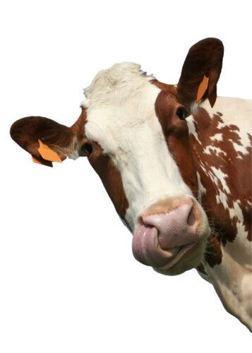 kopf Kuh Aufkleber Tier