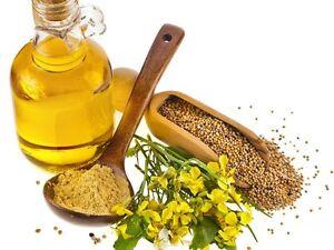 60-Semillas-Frescas-Mostaza-Blanca-SINAPIS-ALBA-Medicinal-Aromaticas