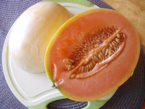"""Karamellaroma  /"""" NEUE SORTE /"""" Saatgut Melonen Samen Jimbee Melone  Vanille"""