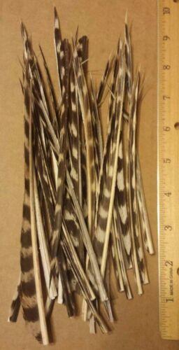 """50 Wild Turkey Biot Strips Fly Tying Feathers 5/""""-9/"""""""