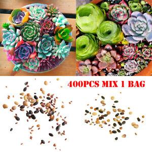 600pcs-Mixed-Succulent-Seeds-Lithops-Rare-Living-Stones-Plants-Cactus-Home-Plant
