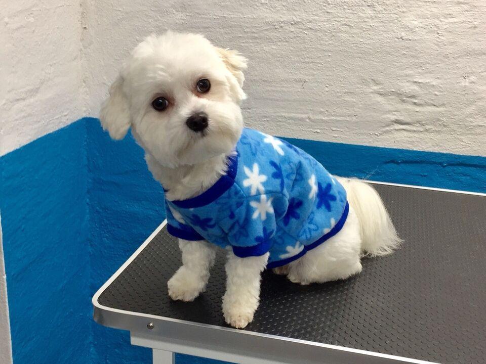 Hundebeklædning, Hunde fleecetrøje