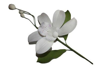 Discreto Bamboo Orchidea Fiore Di Zucchero Bianco Spray, Cake Topper, Torta Nuziale Torta Di Compleanno.- Luminoso E Traslucido Nell'Apparenza