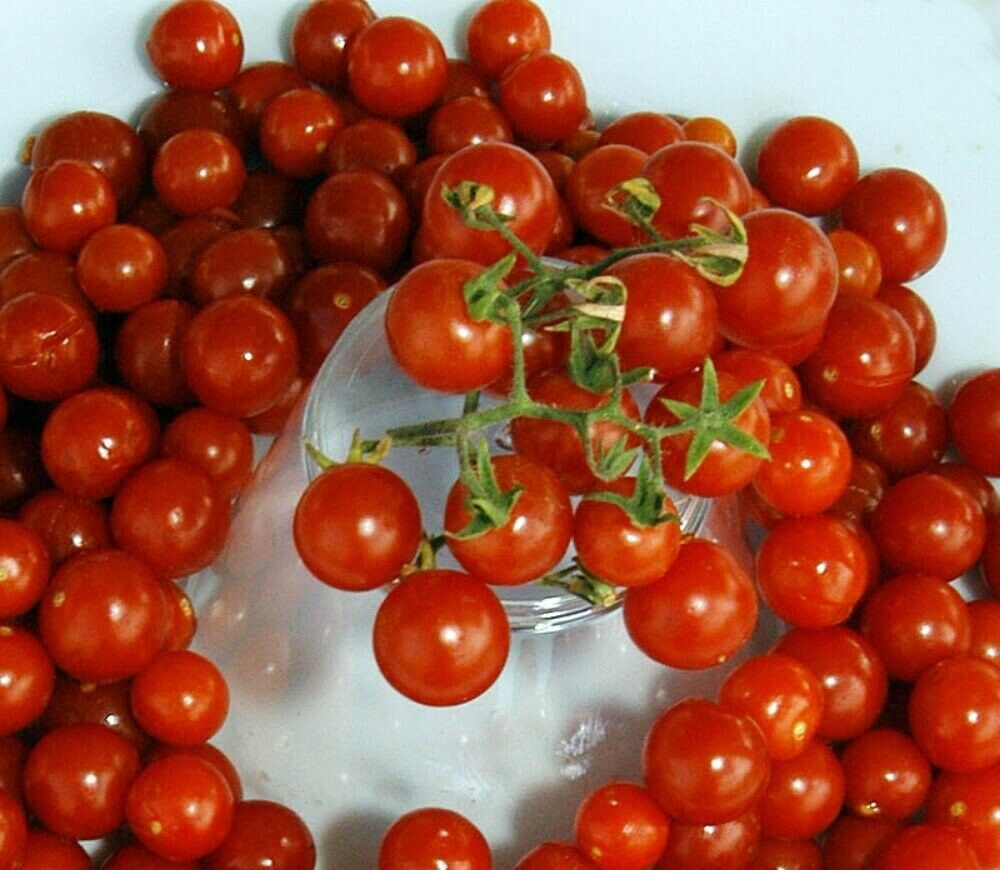 TOMATO (Red Current) 🍅😀 120+ seeds Per Pkt. Care Instructions Included x