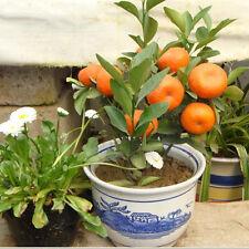 50Pcs Bonsai Edible Fruit Mandarin Citrus Orange Tree Seeds Plant Home Gardens