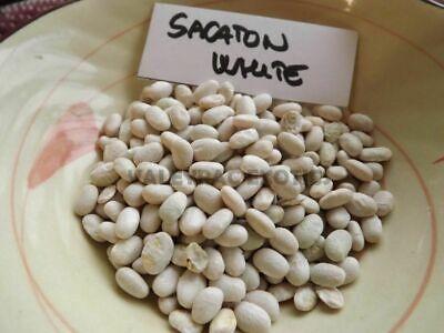 5 White Tohono O/'Odaham Tepary Bean To:ota Bawi Teparybean seeds