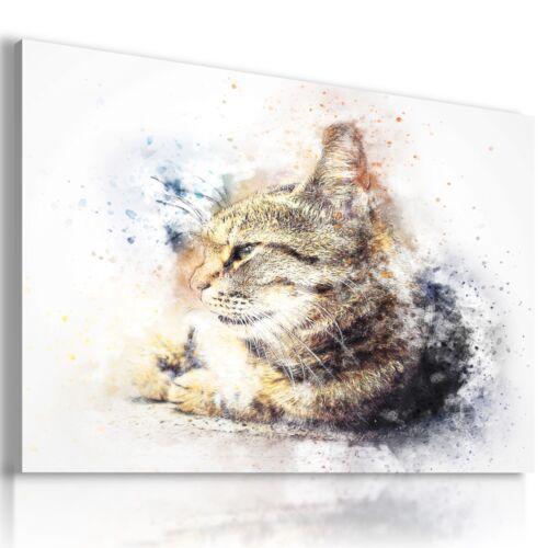 DRAWING CAT KITTEN DOMESTIC AND WILD ANIMALS PRINT CANVAS WALL ART AB768 MATAGA
