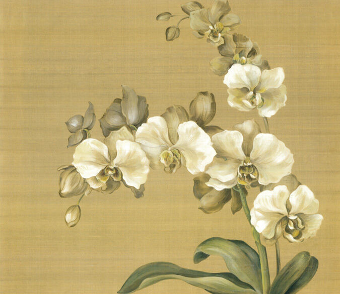 3D Phalaenopsis 1A WallPaper Murals Wall Print Decal Wall Deco AJ WALLPAPER