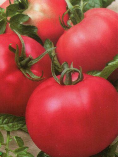 Seeds organic heirloom Tomato Pink honey sweet from Ukraine