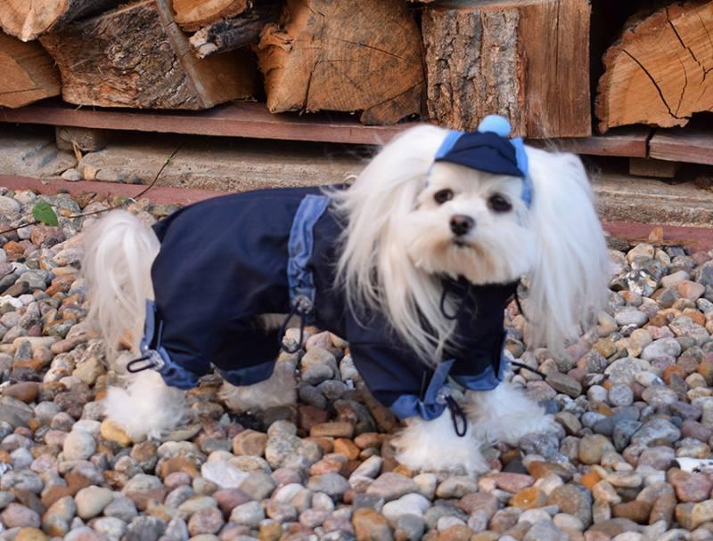 Hunde Winteranzug TYPHOON mit mit mit DRing dogszone ac5c7a
