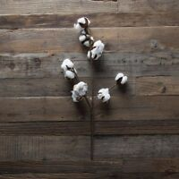 Cotton Boll Stem 20set Of 2southern Charm Farmhouse Decor