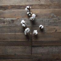 Cotton Boll Stem 20set Of 2southern Charm Farmhouse Decor