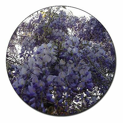 Abile Cascading Wisteria Flowers Fridge Magnet Stocking Filler Christmas Gift, Fl-11fm