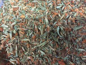 Wild-Dagga-Leonotis-leonurus-WHOLE-FLOWER-C-S-Organic-Schmerbals-Herbals