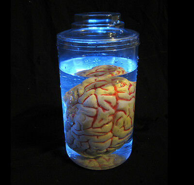 Lighted Mad Scientist Brain Human Body Part in Jar Halloween Party Prop Tabletop