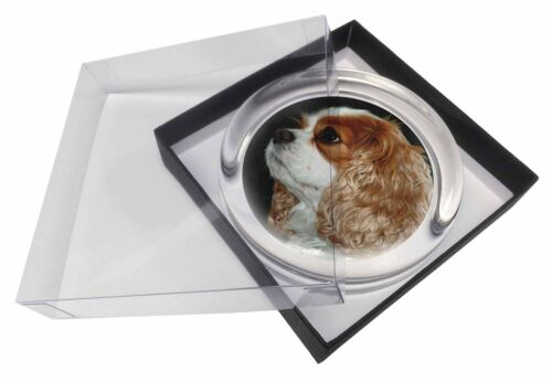 Blenheim King Charles Spaniel Glass Paper in Gift Box Christmas, ADSKC1PW