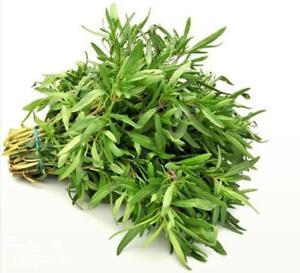 Summer Savory Oster Herb Seeds Satureja hortensis