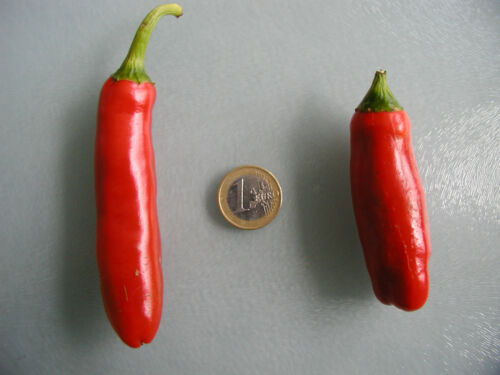 Scharf Pflanze Chili Jungpflanze Pepperoni SG: 5-6 Jalapeno Hot Spicy