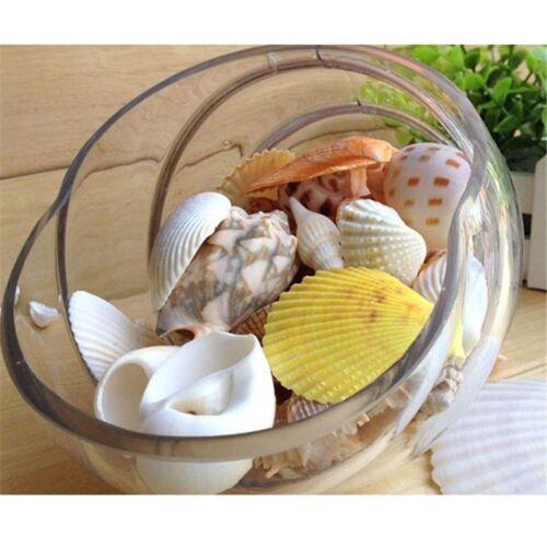 100g plage mixte coquillages de mer artisanat Sea Shell Natural Aquarium De CH