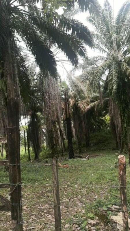 Terreno de 20 hectareas rumbo al Ejido el Naranjo en Palenque Chiapas