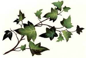 Ivy-Green-Leaf-Spray-Select-A-Size-Ceramic-Waterslide-Decals-Xx