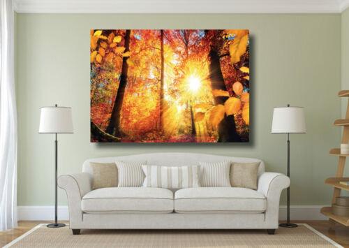 A0 A1 A2 A3 A4 Beautiful Landscape Autumn Trees Large Poster Wall Art Print