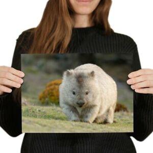 A4-Cute-Wombat-Australia-Animal-Poster-29-7X21cm280gsm-2295