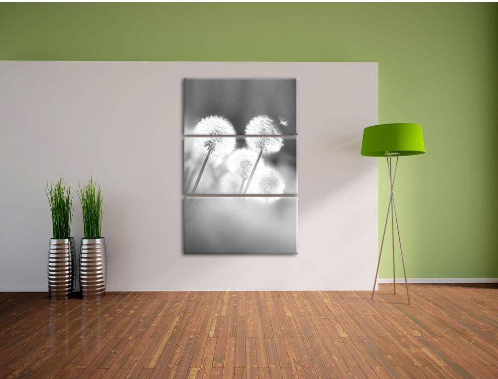 Pissenlits Im Morgendlichen 3-Teiler Vent Art B&w 3-Teiler Morgendlichen Image de Toile Décoration 7d3e56