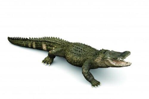 Papo 50254 Alligatore 18 cm acqua mondo novità 2019